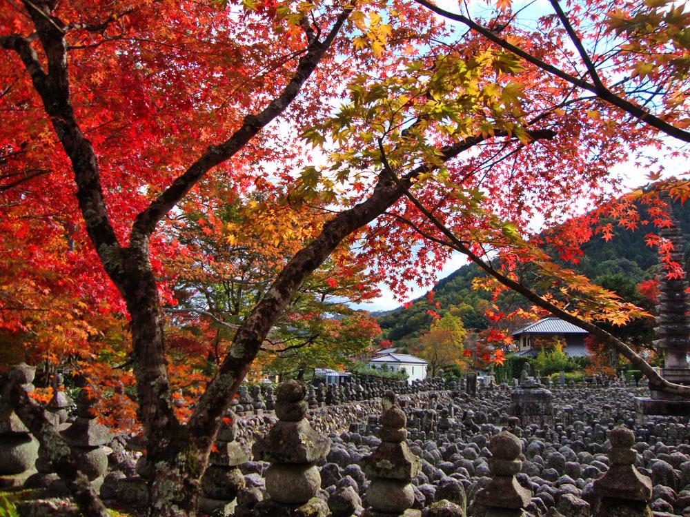 化野念仏寺の紅葉の写真素材
