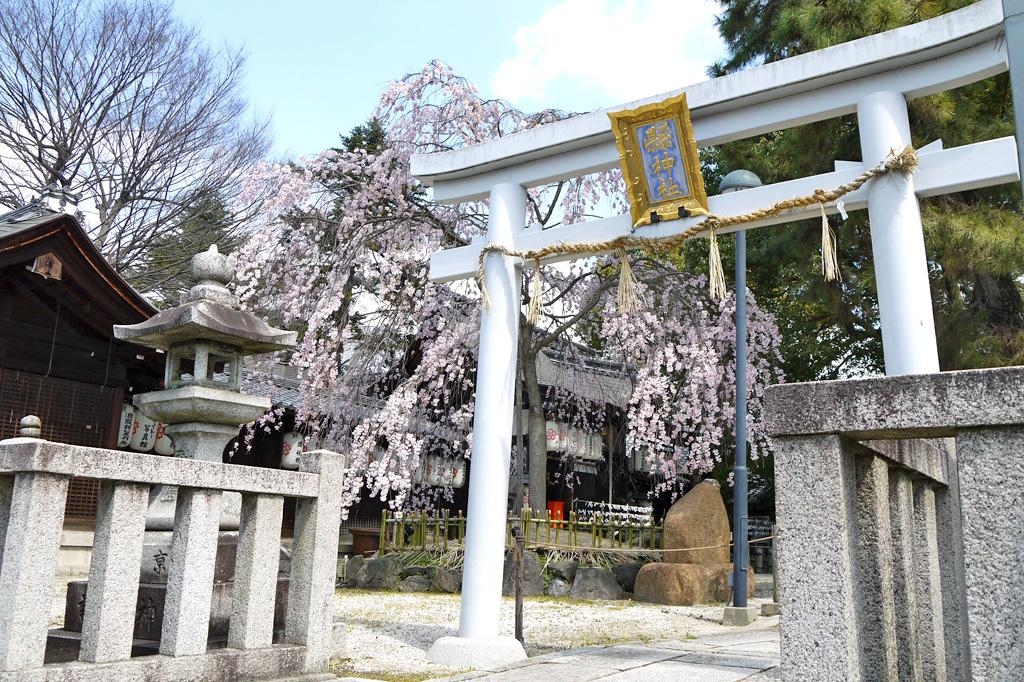 県神社の写真素材