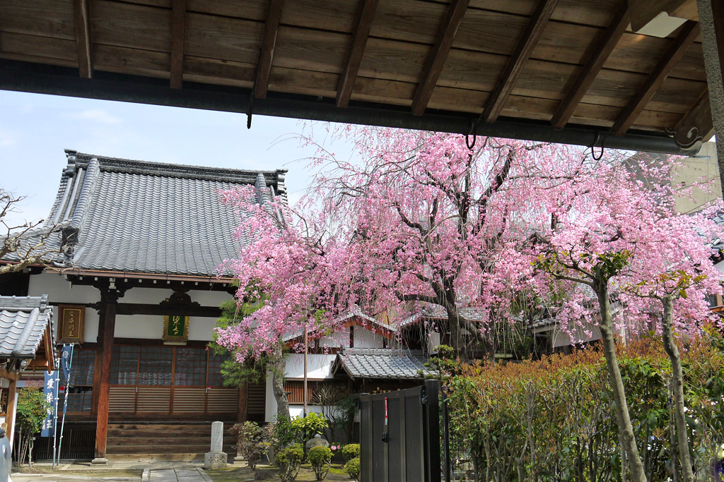 愛染寺の写真素材