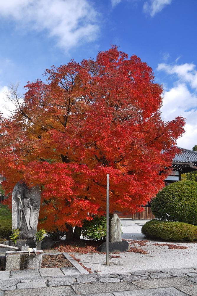 阿弥陀寺の紅葉の写真素材