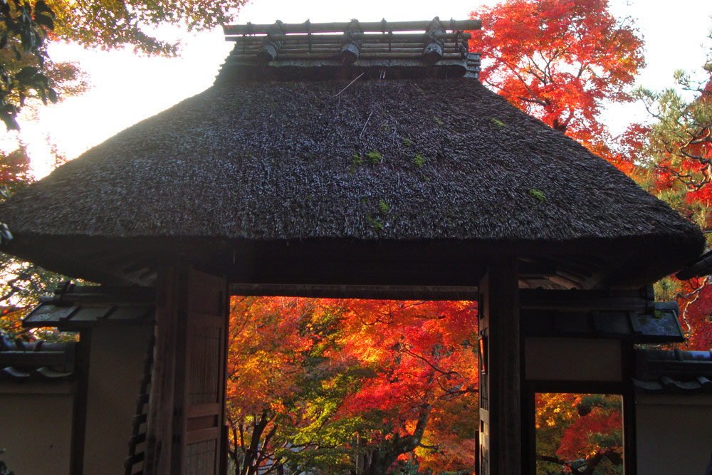 安楽寺の紅葉の写真素材