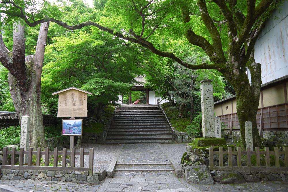 安楽寺のサツキ