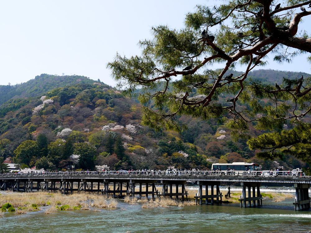 嵐山渡月橋の春 桜の写真