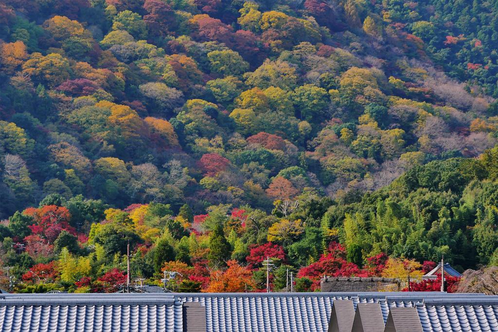 嵐山・紅葉の写真素材