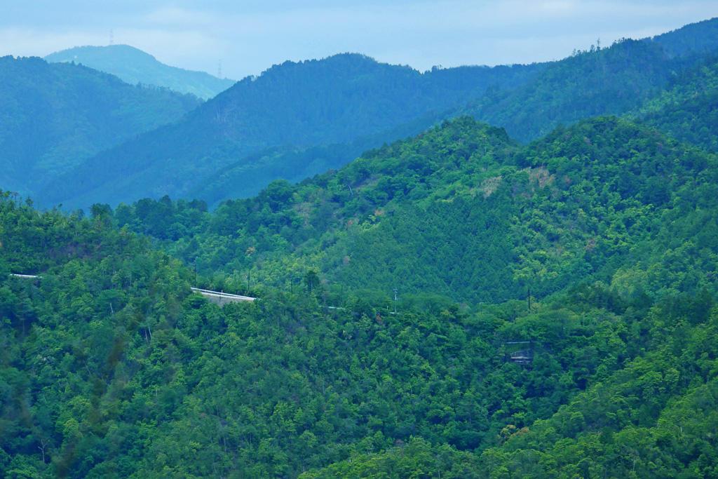 嵐山高雄パークウェイの藤棚の写真素材