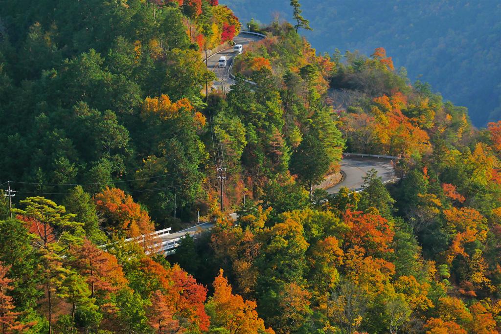 嵐山高雄パークウェイの紅葉の写真素材