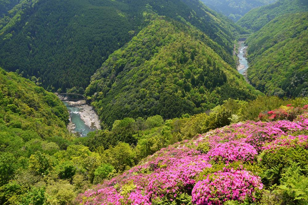 嵐山高雄パークウェイの眺望