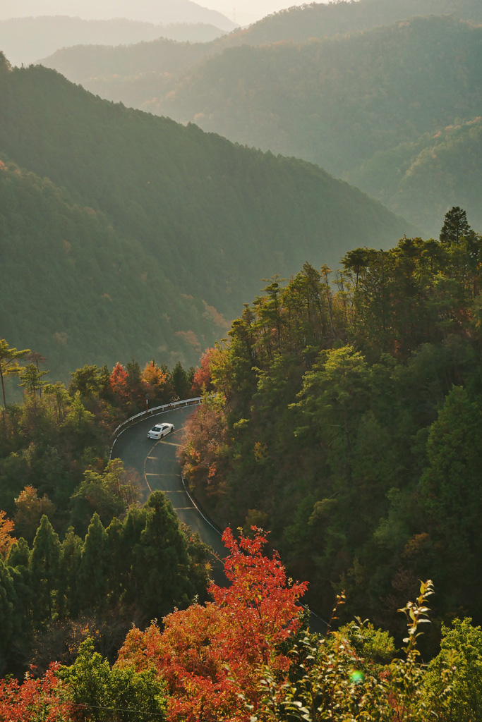 嵐山高雄パークウェイの秋の写真素材