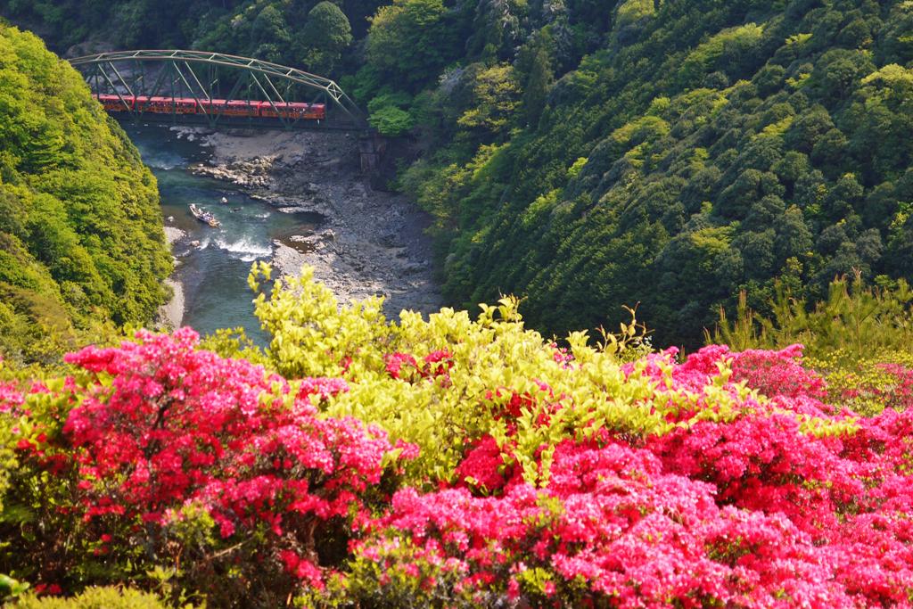 嵐山高雄パークウェイから見た嵯峨野トロッコ列車の写真素材