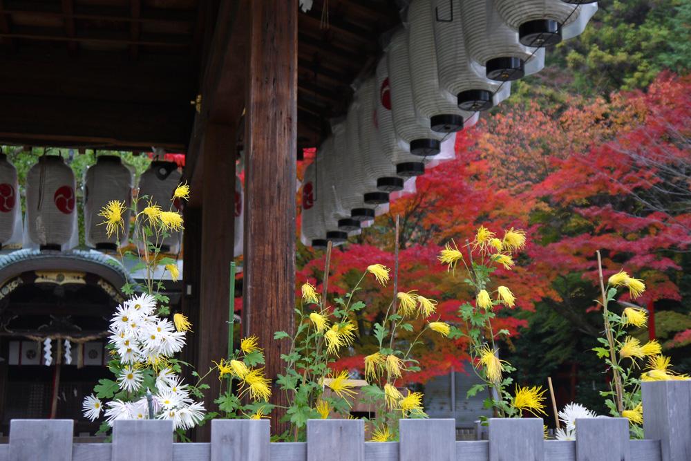 粟田神社の紅葉の写真素材