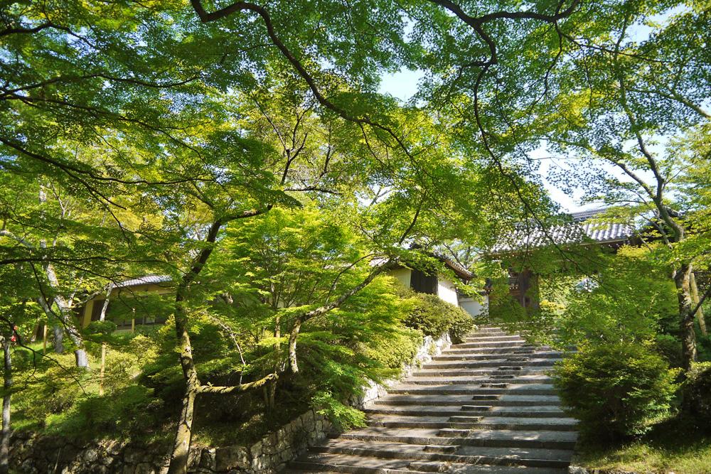 山科毘沙門堂の青もみじの写真素材