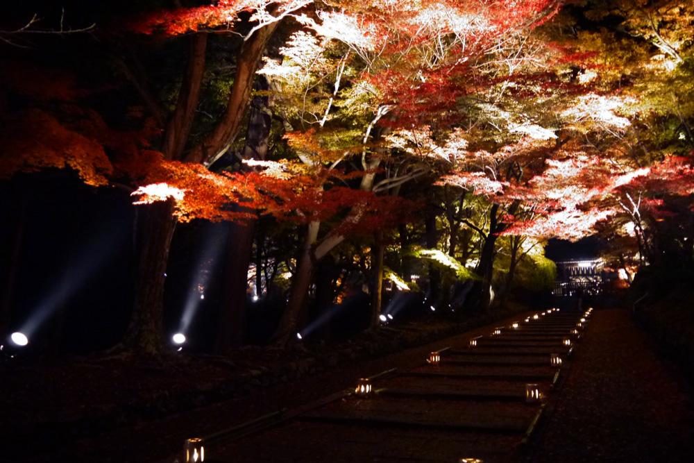 山科毘沙門堂の紅葉ライトアップ