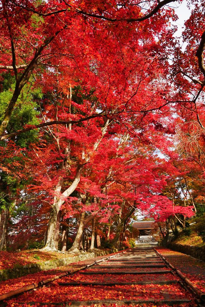山科毘沙門堂の紅葉の写真素材