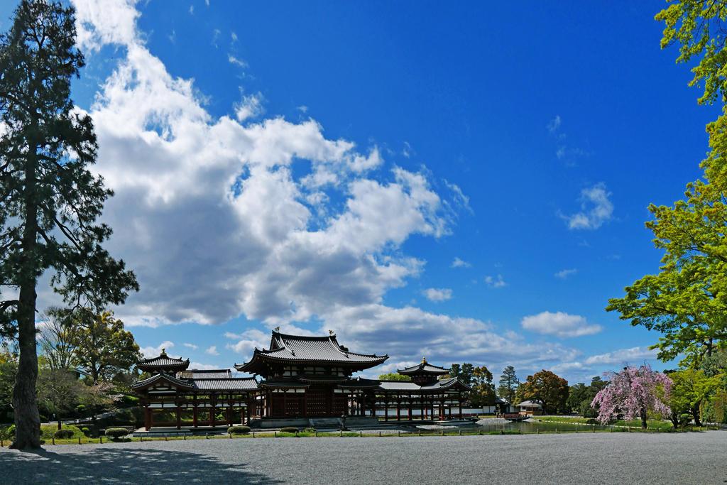 平等院鳳凰堂の桜の写真素材
