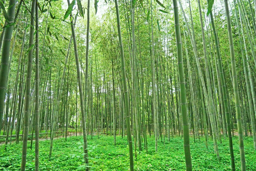 竹林の道の写真素材