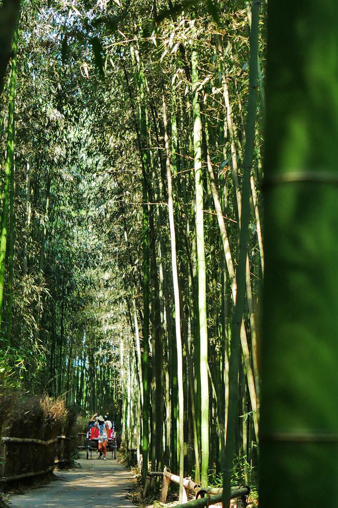 人力車 竹林の道の写真素材