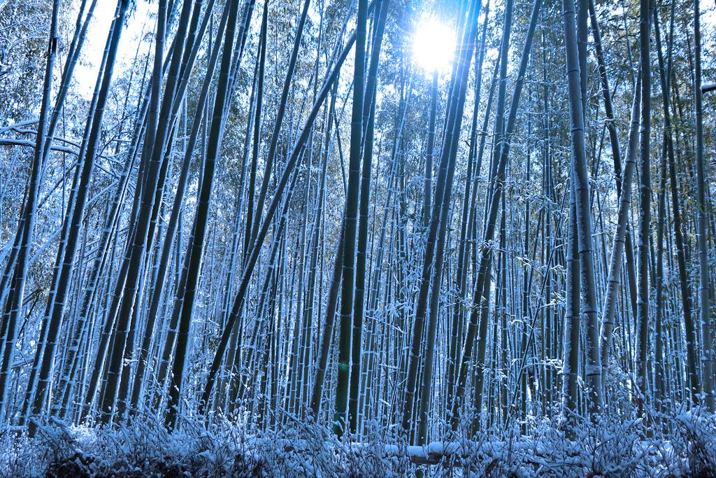 雪 竹の小径の写真素材