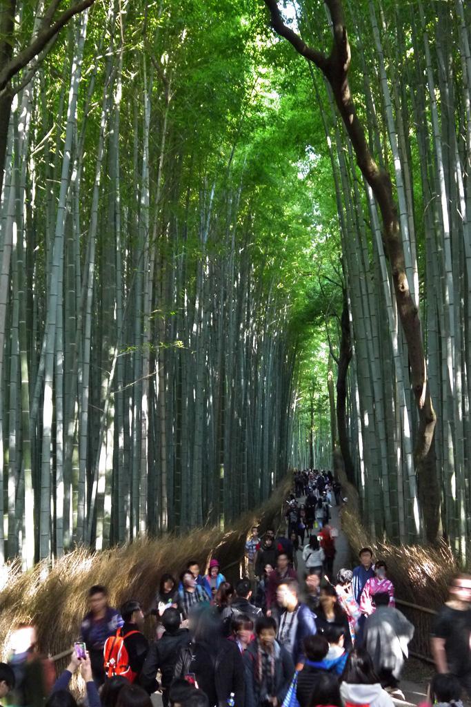 祝日 竹の小径の写真素材