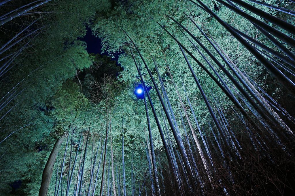 竹林の道の満月の写真素材