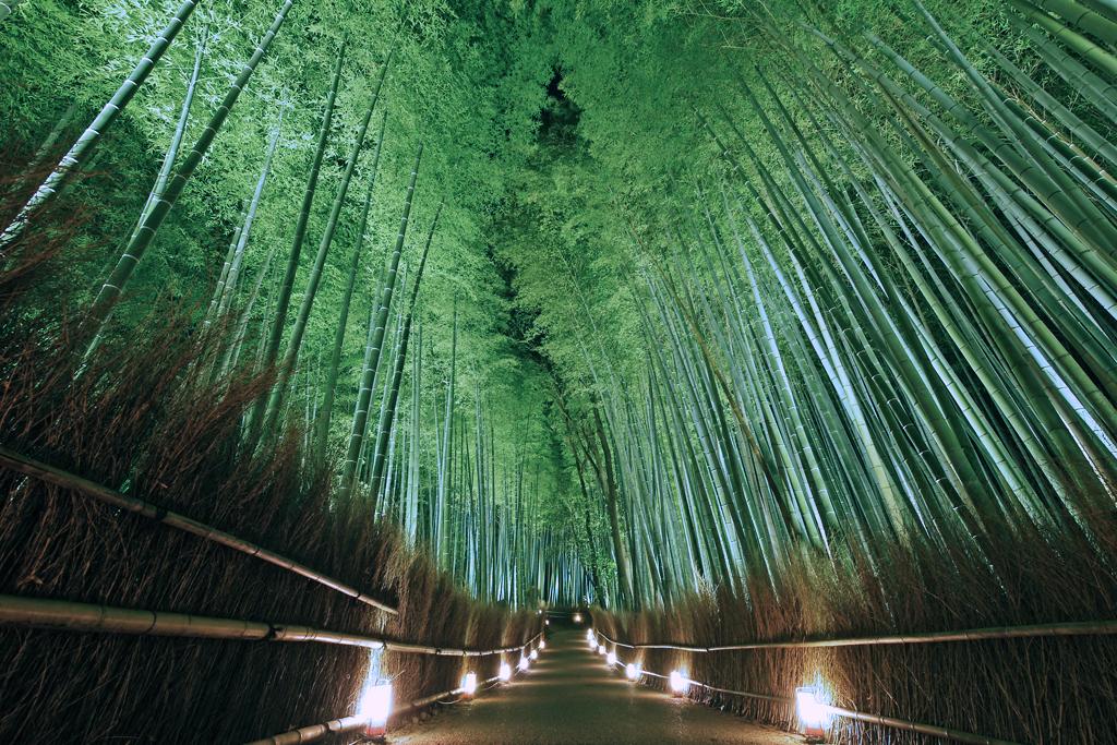 嵐山花灯路 竹の小径