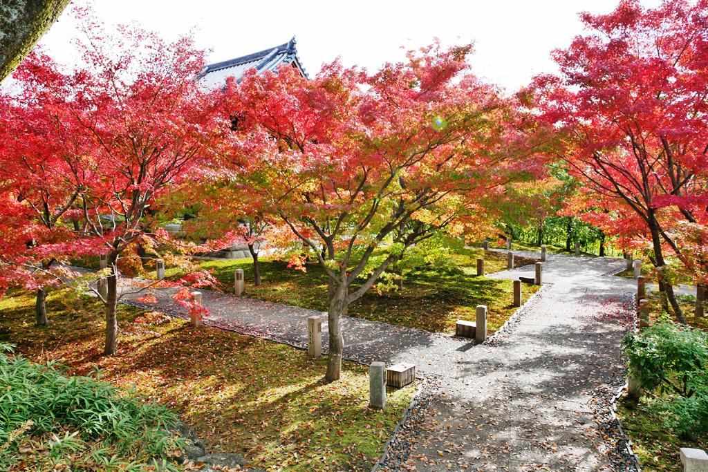智積院の紅葉の写真素材