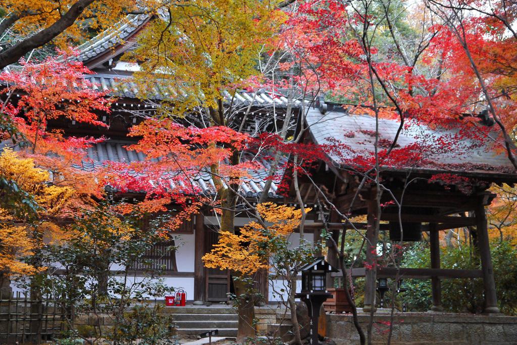 長楽寺の紅葉の写真素材