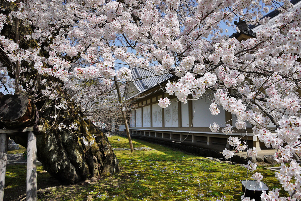 醍醐寺霊宝館の写真素材