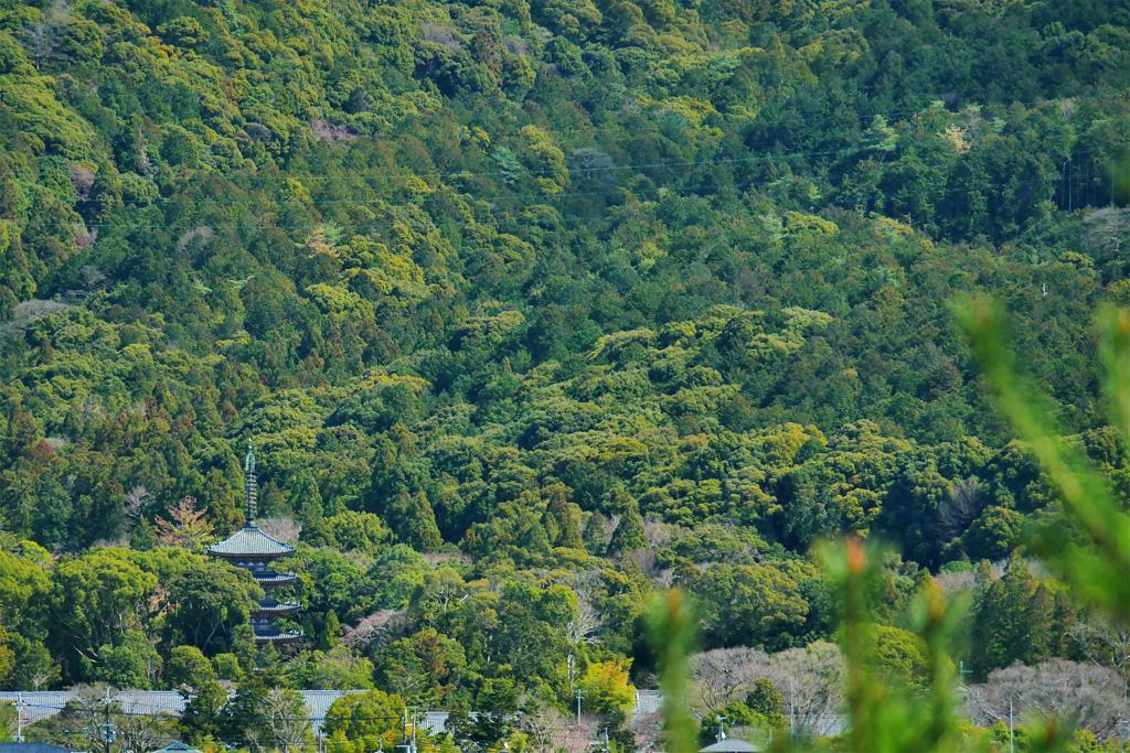 醍醐寺 遠望の写真素材