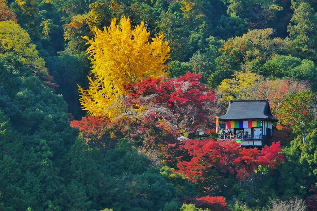 嵐山の展望台からの紅葉写真
