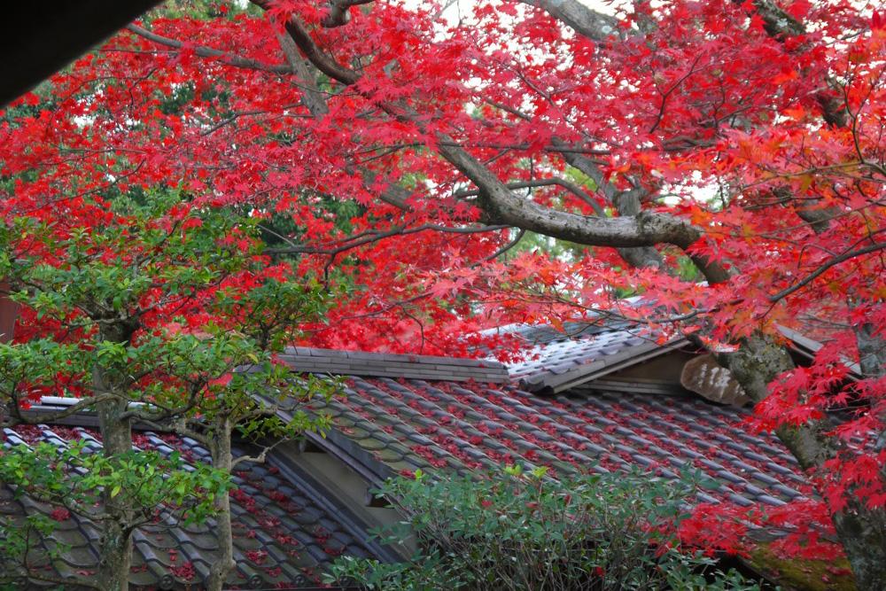 妙心寺大法院の紅葉の写真素材