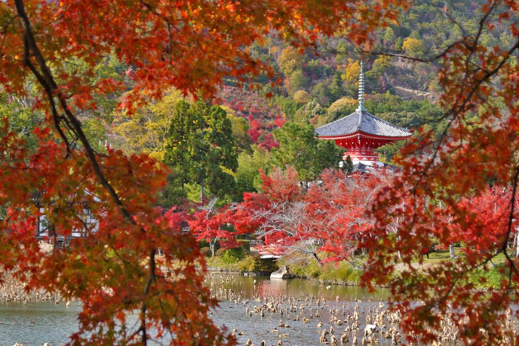 大覚寺の紅葉