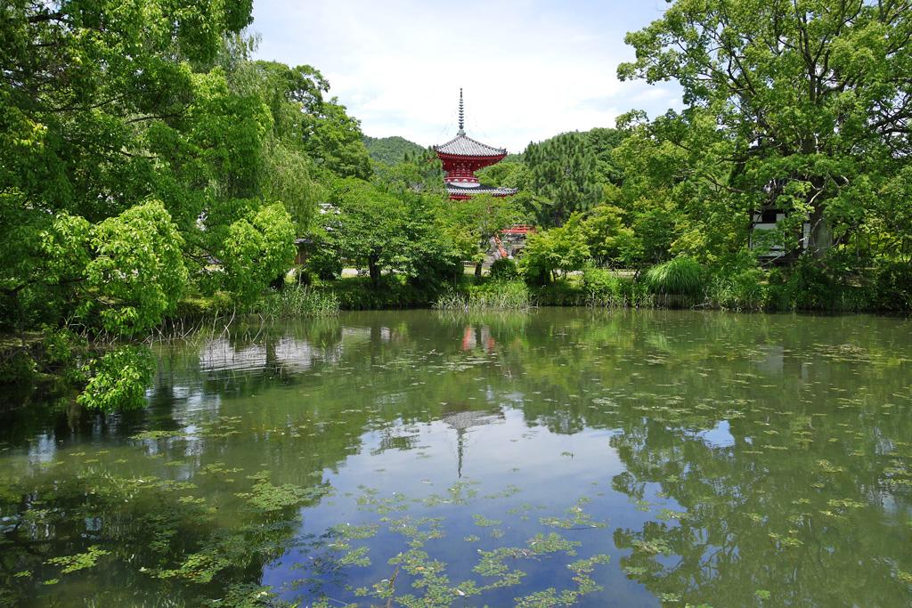 大沢池の写真素材