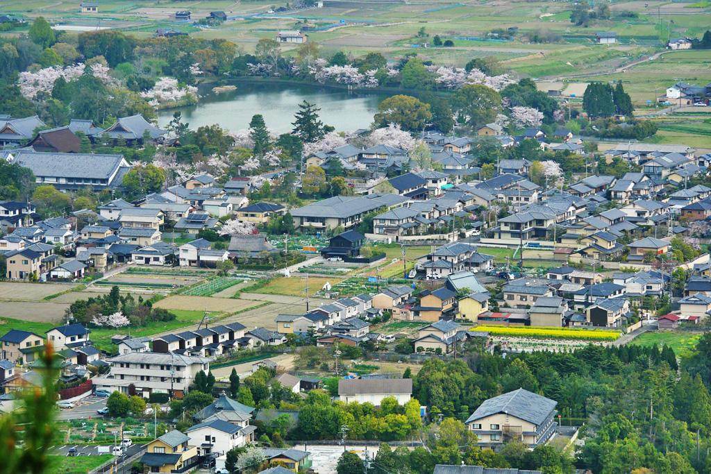 桜 大沢池と大覚寺の写真素材