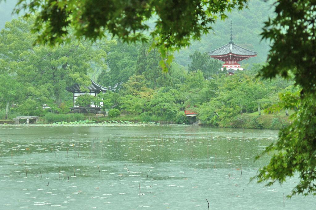雨の大覚寺 大沢池の写真素材