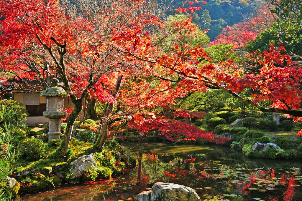 大寧軒の秋の写真素材