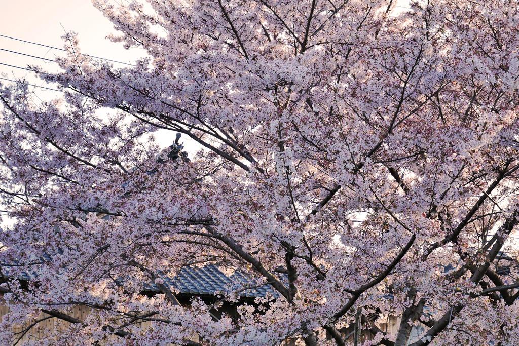 大蓮寺の写真素材