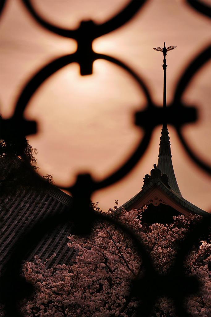 祇園閣と桜と夕日の写真素材