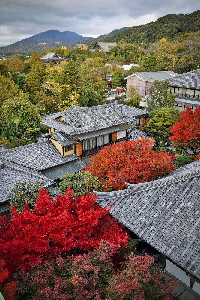 大雲院の紅葉