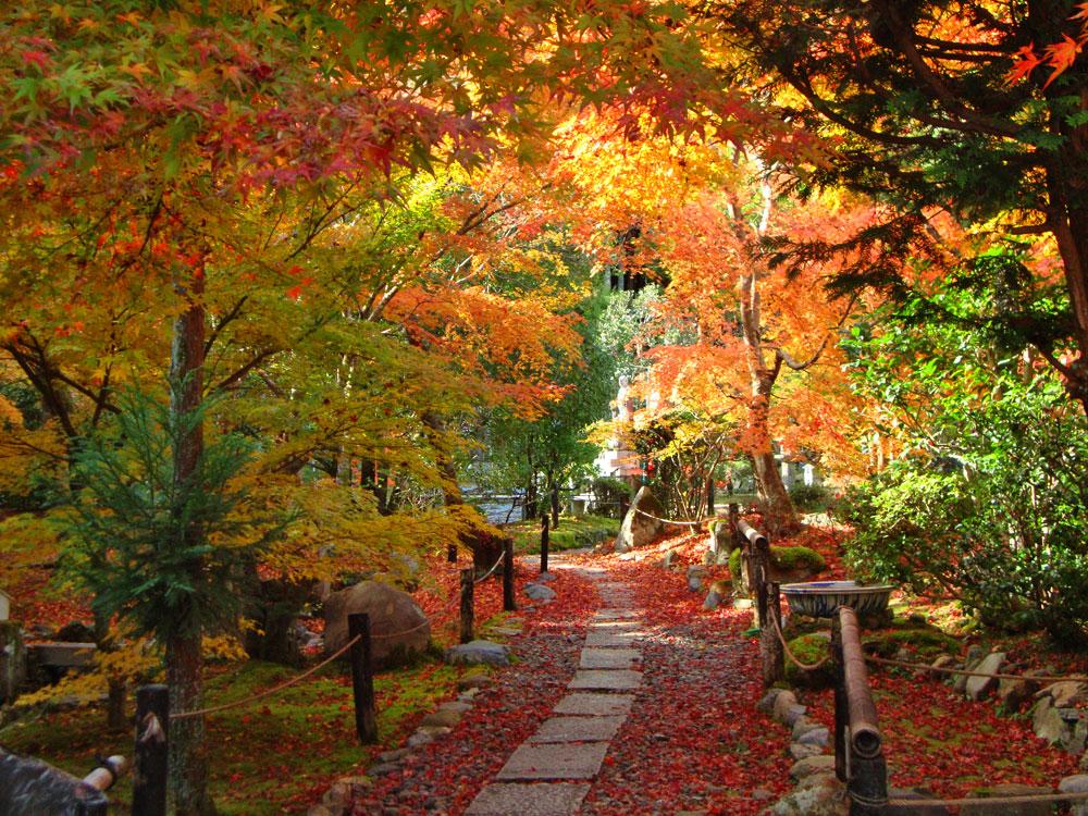 檀林寺の紅葉