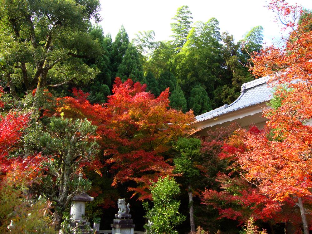 檀林寺の紅葉の写真素材