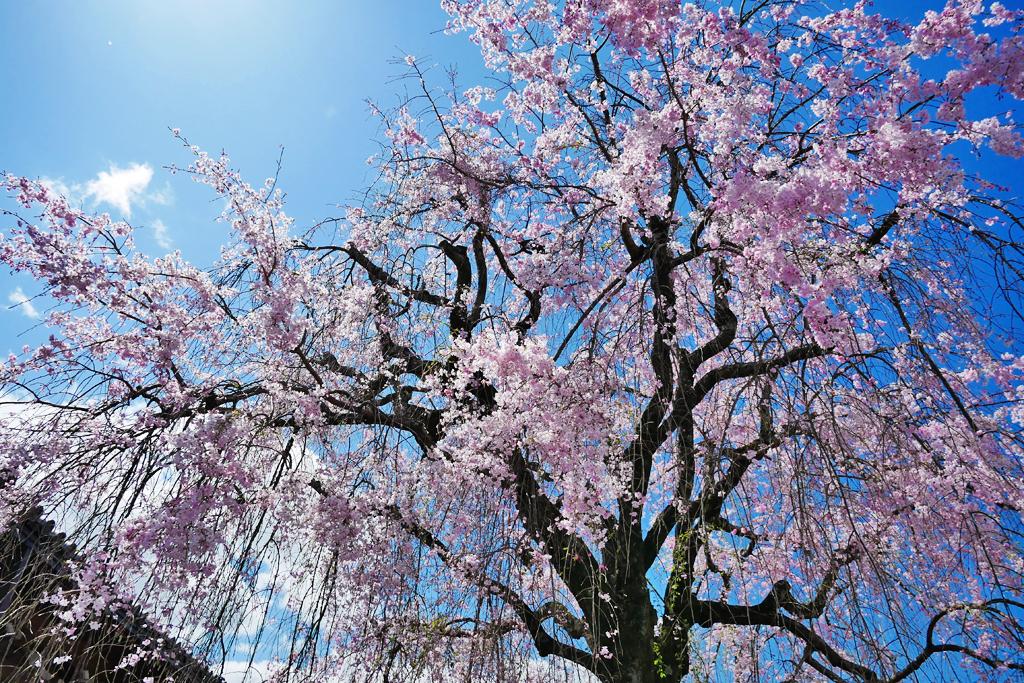 恵福寺の写真素材