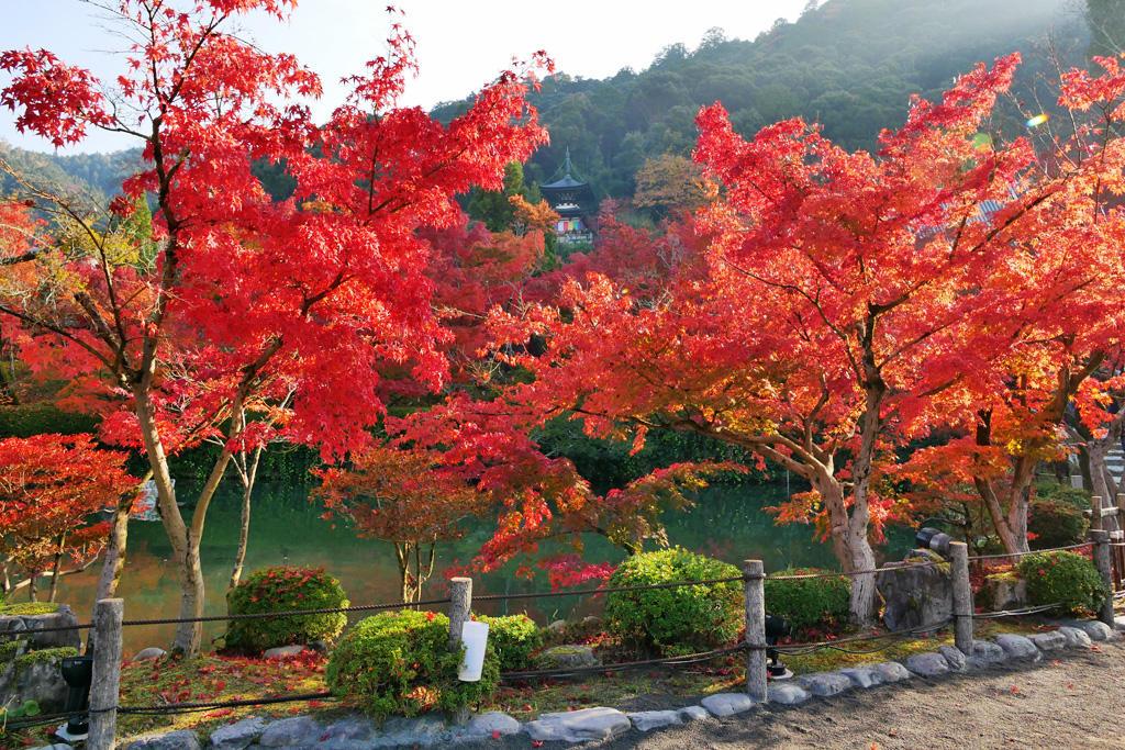 永観堂の秋の写真素材
