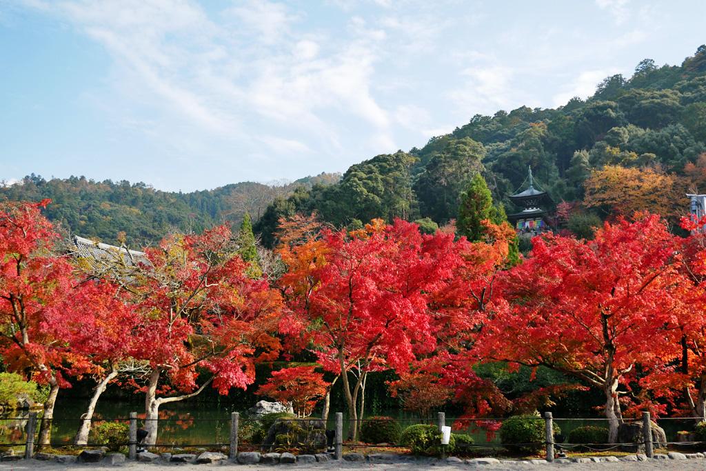 永観堂の紅葉の写真素材