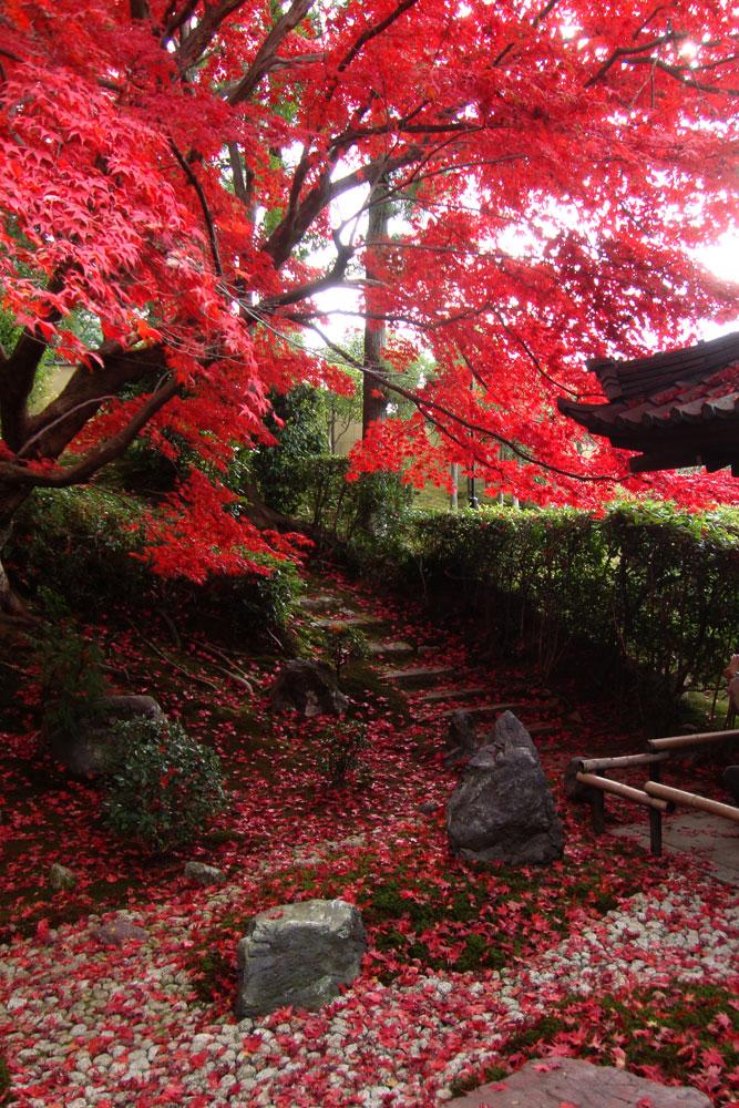 金戒光明寺栄摂院の紅葉