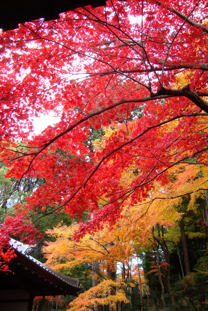 金戒光明寺栄摂院の紅葉の写真素材