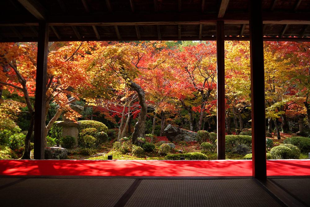 圓光寺の紅葉の写真素材