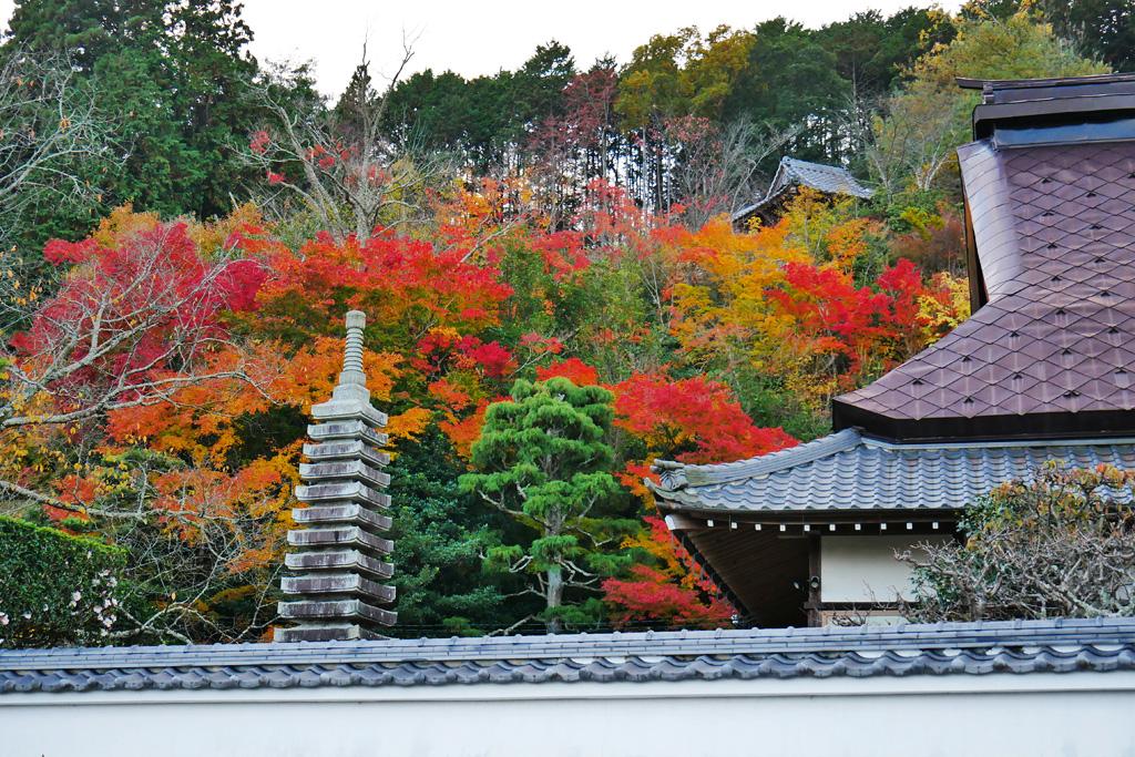 亀岡 延福寺の紅葉 写真素材