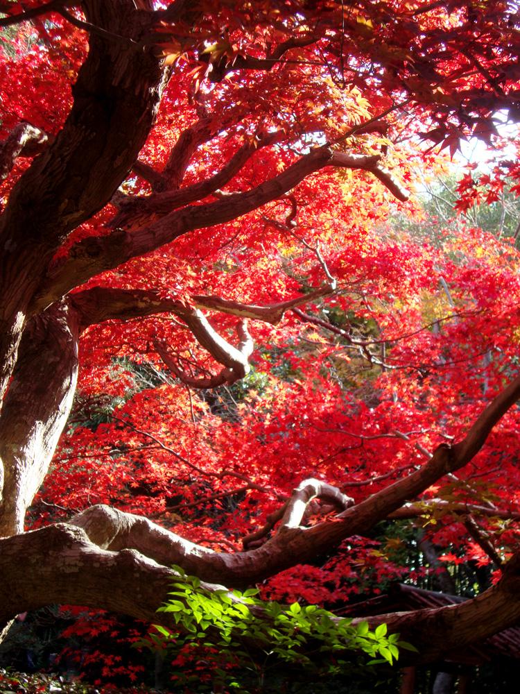 厭離庵(えんりあん)の紅葉の写真素材