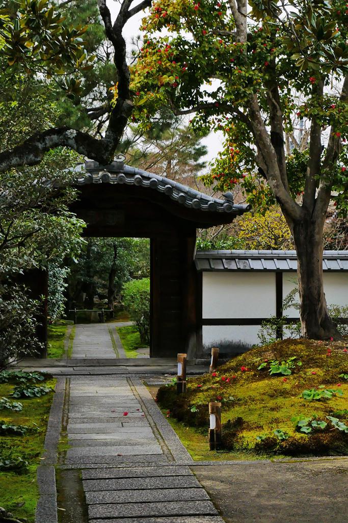 圓徳院の前庭の椿の写真素材