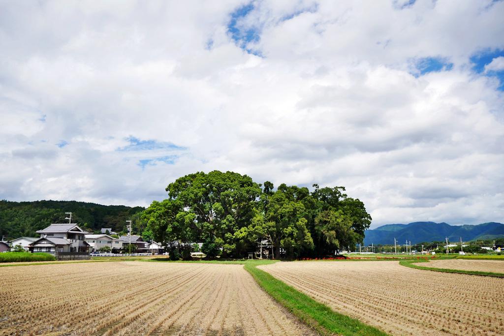 藤越神社の写真素材